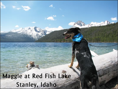 Maggie at Red Fish Lake, Stanley Idaho (the dog wallk section).