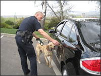 Officer C. Stambaugh directs Bosco on a vehicle search. Bosco successfully found a small amount of meth hidden beneath the car's license plate.