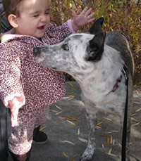 1 Year Old Shae and Blue Belle