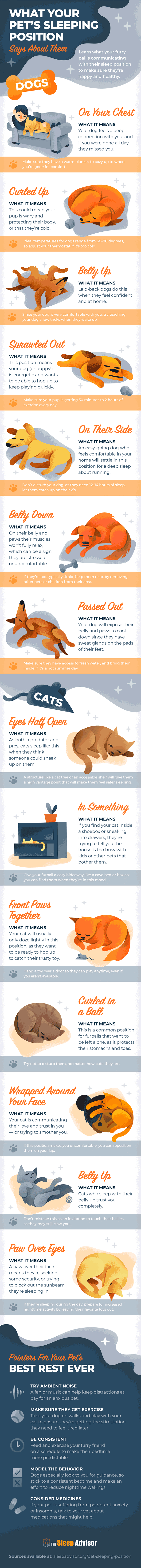 What your pet's sleeping position means infographic
