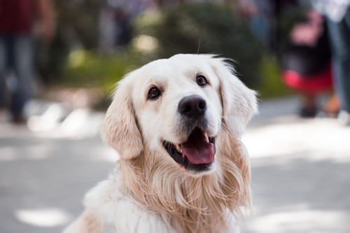 Adorable dog.