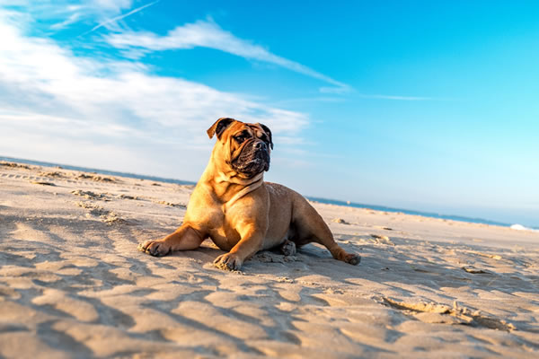 Dog on beach.