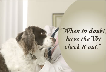 When in doubt have the vet check it out.