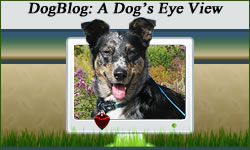 Best Dog Blog Website