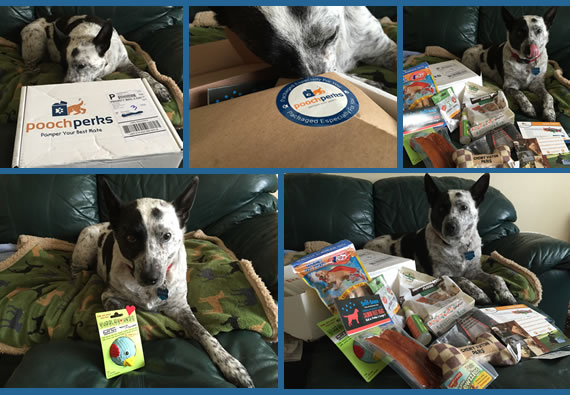 DogBlog Review - Pooch Perks
