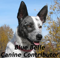 Blue Belle Canine Contributor