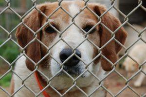 Old dog waiting