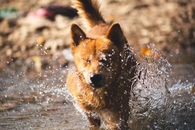 Dog having fun in water