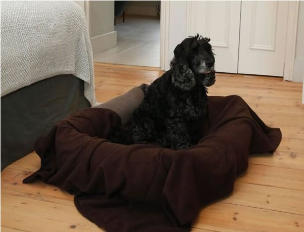 copper dog bed