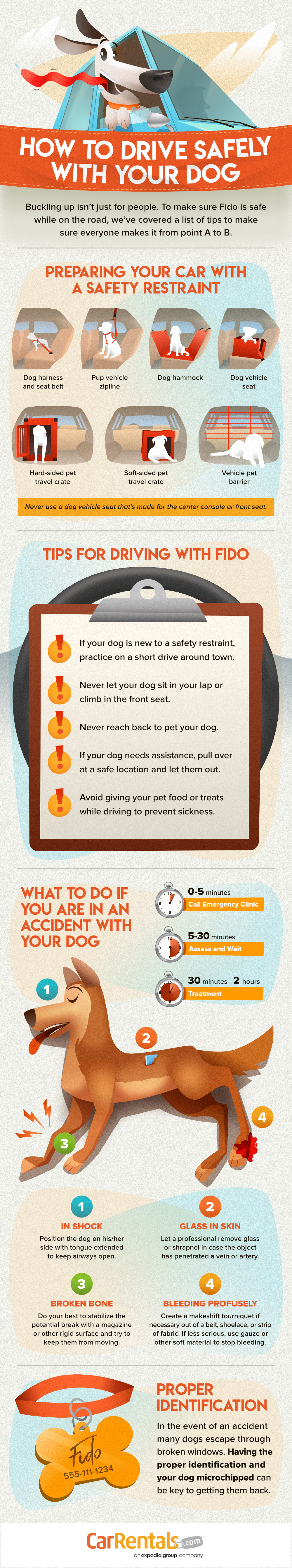How to drive safely with dogs