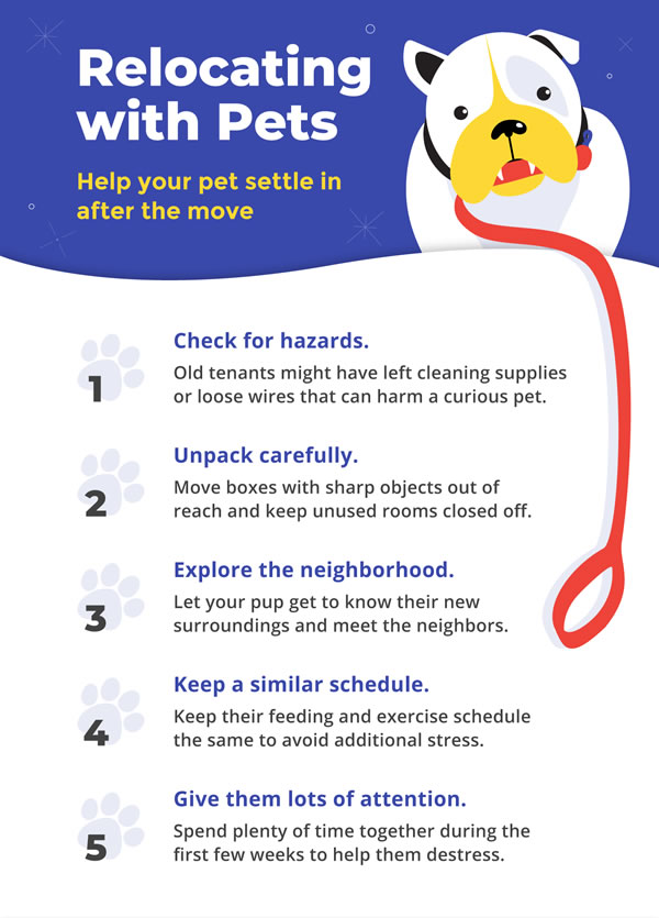 Help your pet settle in after the move.