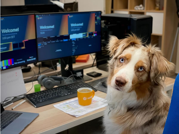 Dog in home office