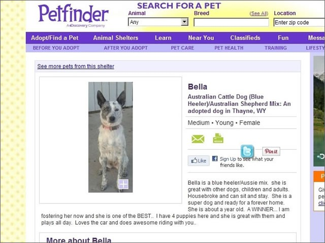 PetFinder.com Website